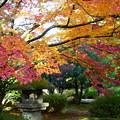 天徳院 紅葉