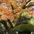 Photos: 天徳院 紅葉(3)