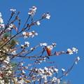 Photos: 十月桜と紅葉