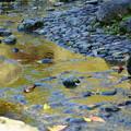兼六園 黄金の曲水