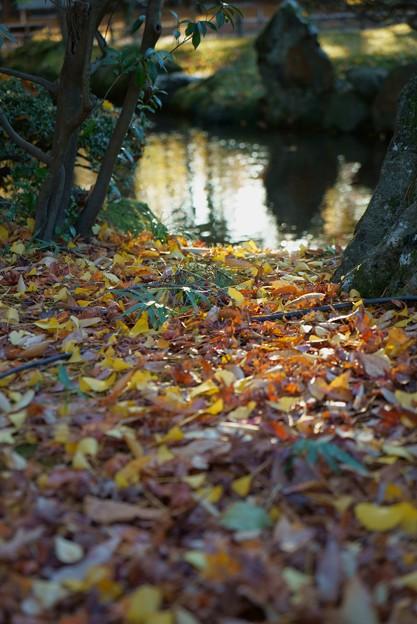 兼六園 曲水と落ち葉