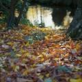 Photos: 兼六園 曲水と落ち葉