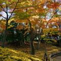 Photos: 紅葉と落ち葉