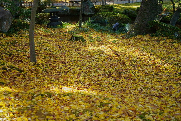 Photos: 兼六園 落ち葉の絨毯