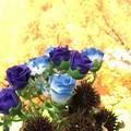 Photos: 造花とエキナセアのドライ