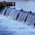 Photos: 犀川 段になって流れる 堰「セキ」