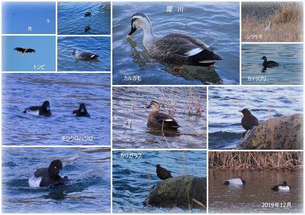 12月 犀川  鳥