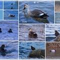 Photos: 12月 犀川  鳥