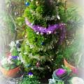 ゴールドクレストのクリスマスツリー