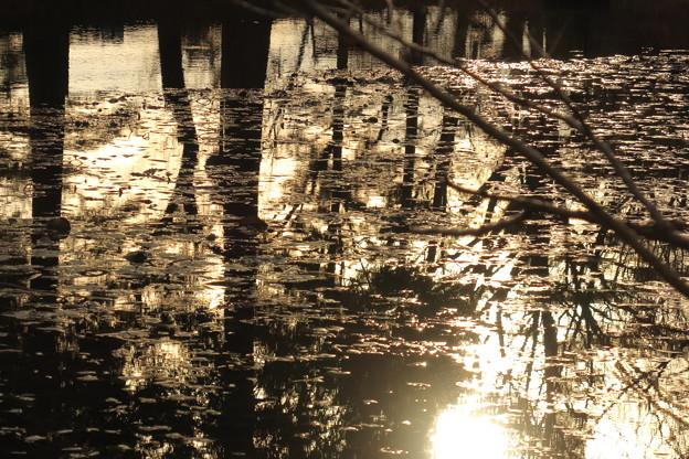 神秘の池 キラキラ ☆彡