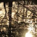 Photos: 神秘の池 キラキラ ☆彡