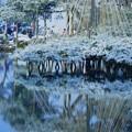 唐崎松  雪(1)