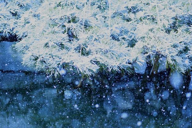 唐崎松  雪(2)