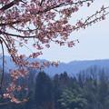 河津桜と山並み(2)