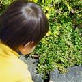 Photos: 菜の花ロードの足元で、青いお花 み~つけた!