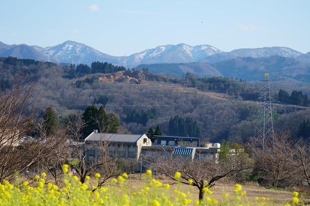 菜の花と山並み(1) 里山