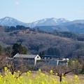 Photos: 菜の花と山並み(1) 里山