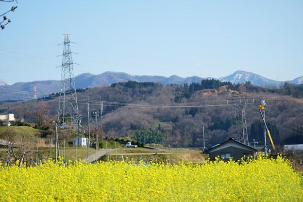 菜の花と山並み(2)  里山