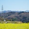 Photos: 菜の花と山並み(2)  里山