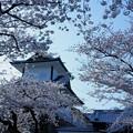 石川門と満開の桜(1)