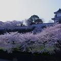 石川門と満開の桜(2)