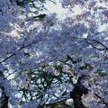 Photos: 金沢城公園