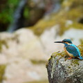 Photos: 滝の前で待機