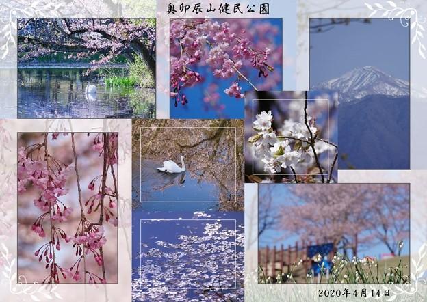 Photos: 4月の奥卯辰山健民公園