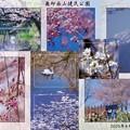 4月の奥卯辰山健民公園