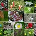 近所で見かけた花と鳥