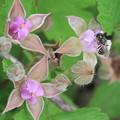 可愛いお花に蜂さん  お花は苗代苺でした^^