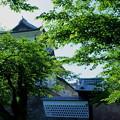 Photos: 新緑の石川門