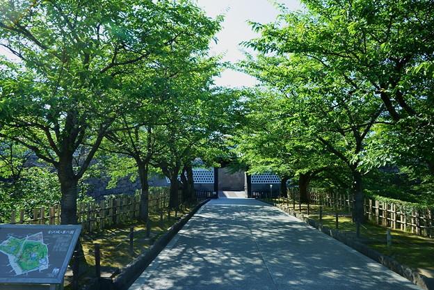 Photos: 新緑のアプローチ  石川門