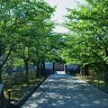 新緑のアプローチ  石川門