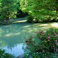 尾山神社 庭園の池 (サツキとドクダミ)