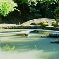 尾山神社 図月橋 庭園の池(1)