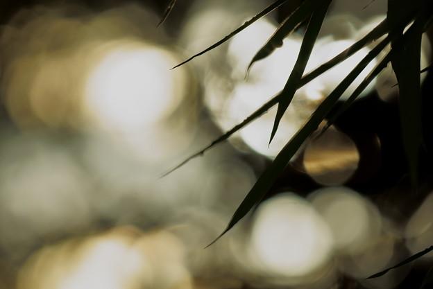 夕暮れの笹の葉