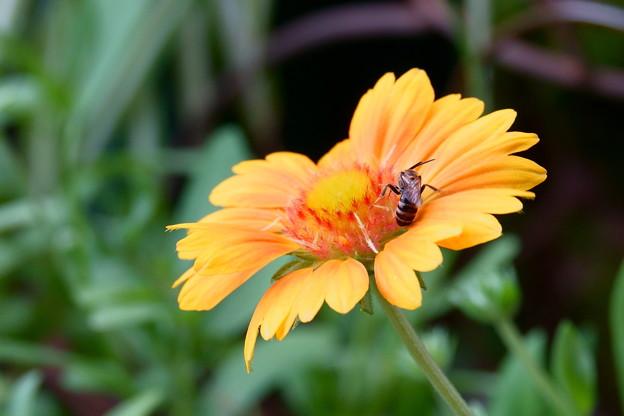 サンドリームに小さな蜂
