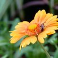 Photos: サンドリームに小さな蜂