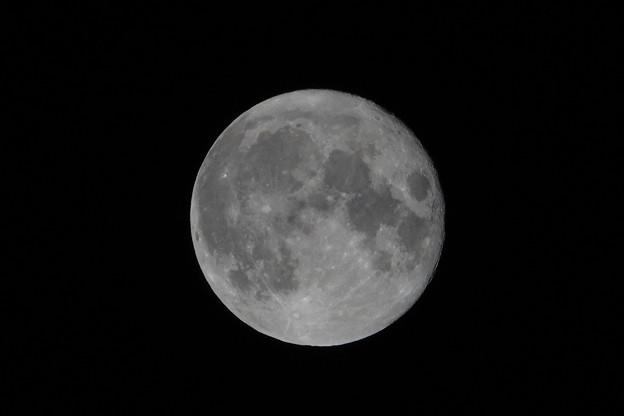 満月 「スタージェンムーン(チョウザメの月)」