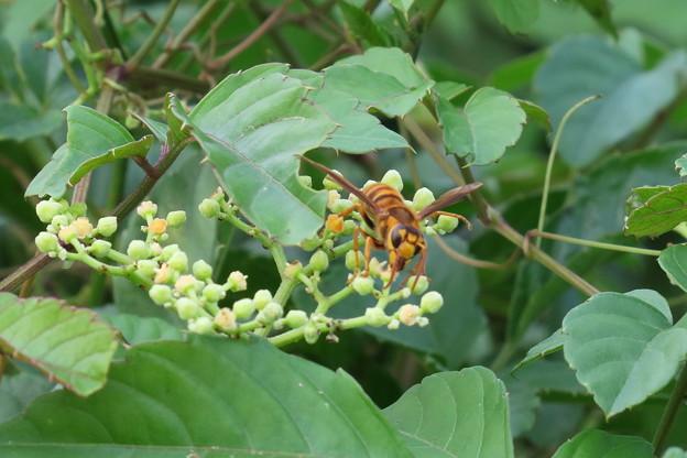 スズメバチ?