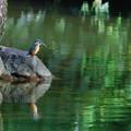 瓢池 カワセミ(5)