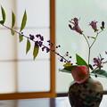 Photos: 秋の色