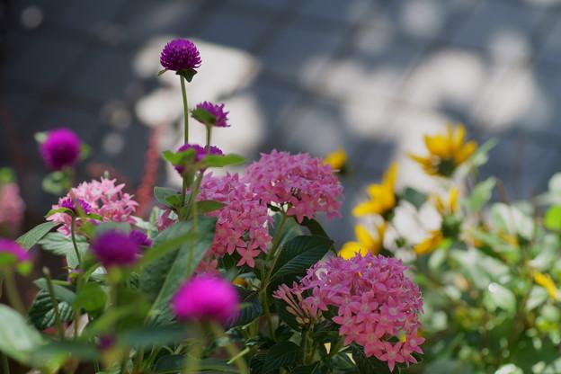 玄関前の花