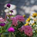 Photos: 玄関前の花