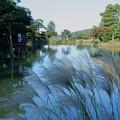 霞が池とススキ(1)