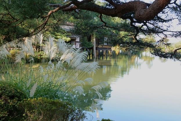 霞が池とススキ(2)