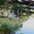 Photos: 霞が池とススキ(2)