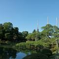 Photos: 唐崎松 雪吊りの支柱