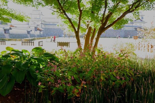 金沢城とホトトギス(花)